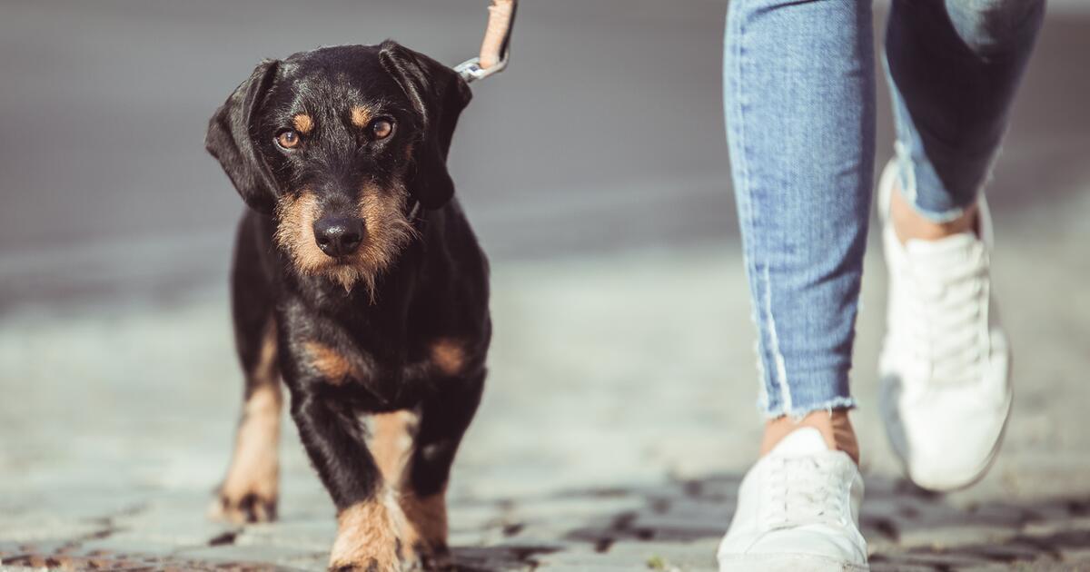 Klöckner möchte Hunden auf Rezept ausreichend Bewegung garantieren